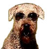 Airedale's Avatar